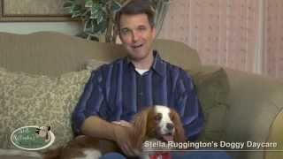 Stella Ruffington's Doggie Daycare Introduction