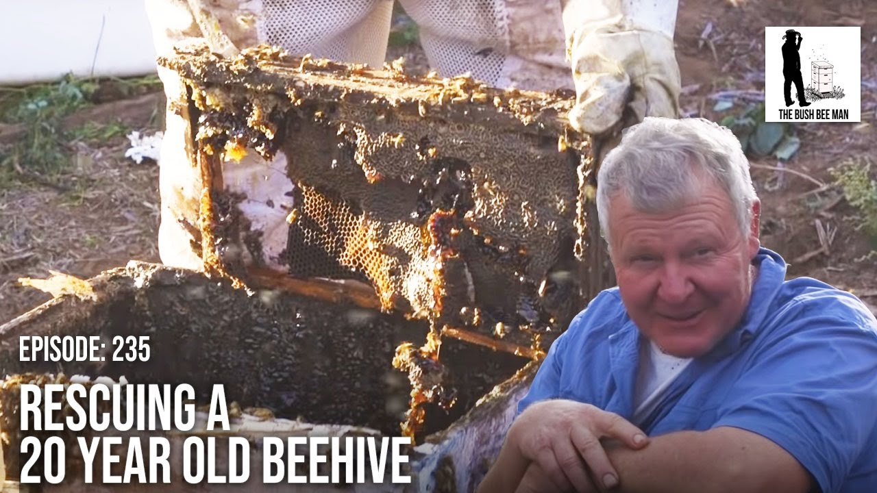 Honey Bee Hive Removal: Honey Bee Rescue & Relocation to Clean Hives | The Bush Bee Man