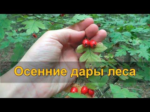 Ядовитые ягоды - mir-
