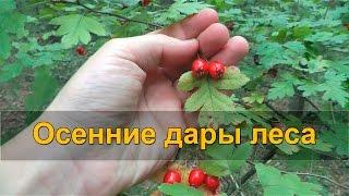 🍒 ОСЕННИЕ ДАРЫ ЛЕСА - лесные ягоды и ягодный чай