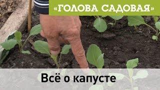 Голова садовая - Все о капусте