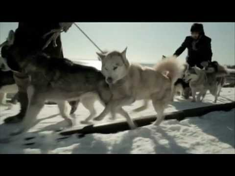 Image result for sled dog soldiers movie  images