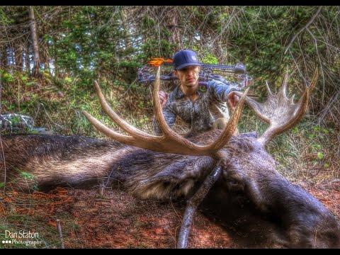 Moose Idaho 2014