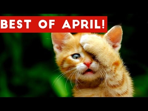 Funniest Pet Reactions & Bloopers of April 2017 | Funny Pet Videos