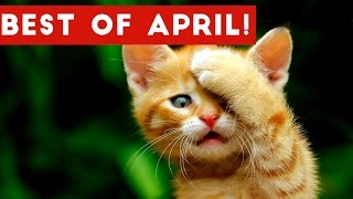 Funniest Pet Reactions & Bloopers of April 2017   Funny Pet Videos