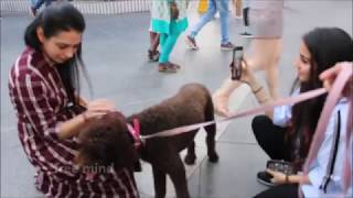 Anjing Lucu Imut Pintar didekati para Cewek Cantik I Free Mind