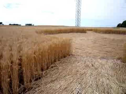 crop circle, holmesville