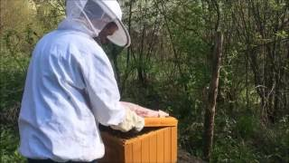 Miodobranie 2016 pszczelarstwo