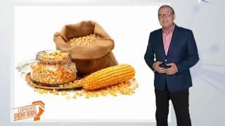 видео Кукуруза обыкновенная (маис) Zea mays