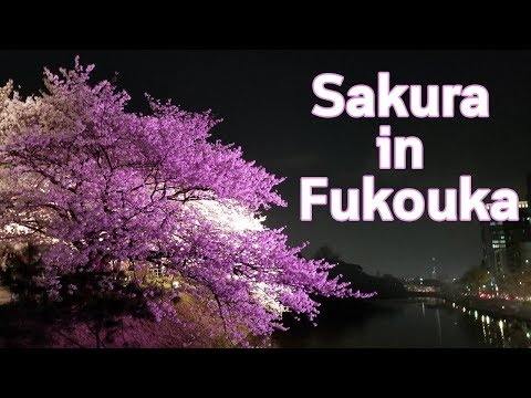 Sakura in Fukuoka - Surprise guest at the end!