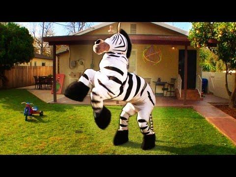 Dope Zebra - Rhett & Link (Official Original Video)