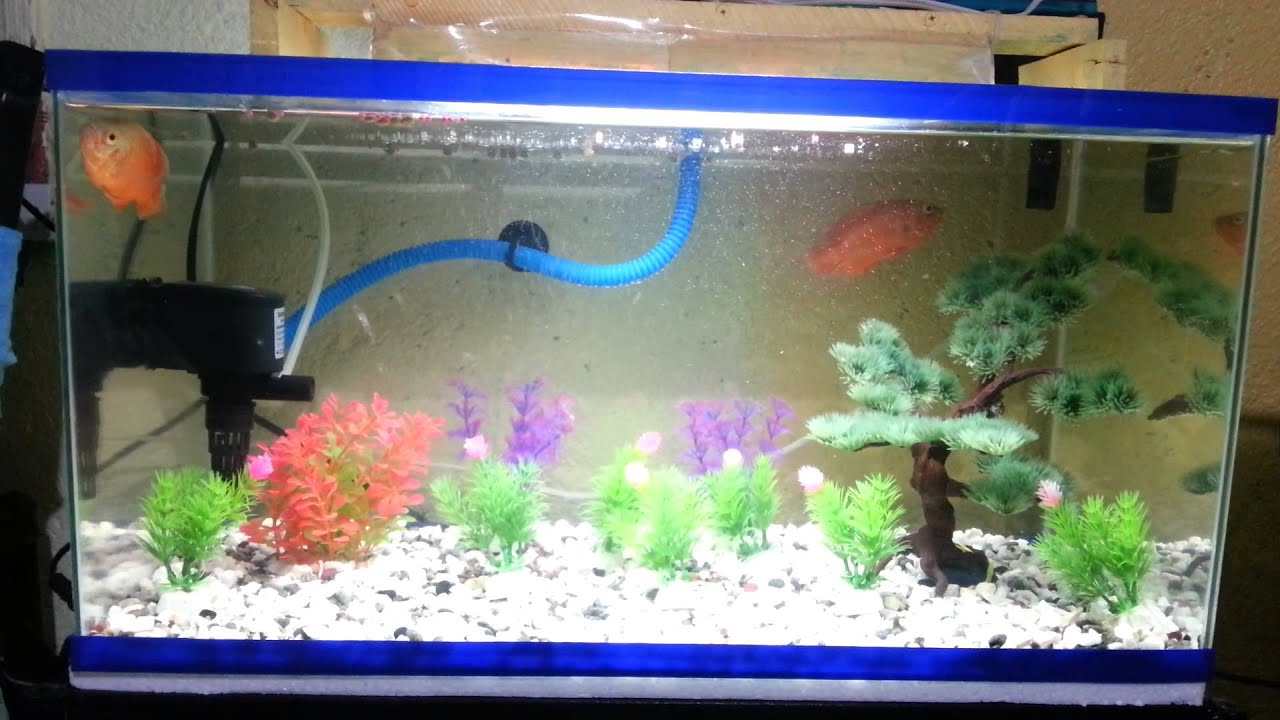 Oscar fish on 15 gallon tank filtered youtube for 15 gallon fish tank
