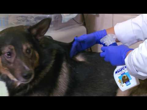 Как правильно обработать животное спреем от блох и клещей