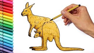 Drawing and kangaroo Wild Animals From Australia Learning Colors and Drawing for Kids