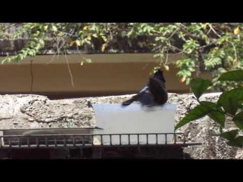 Bird bathing closer view