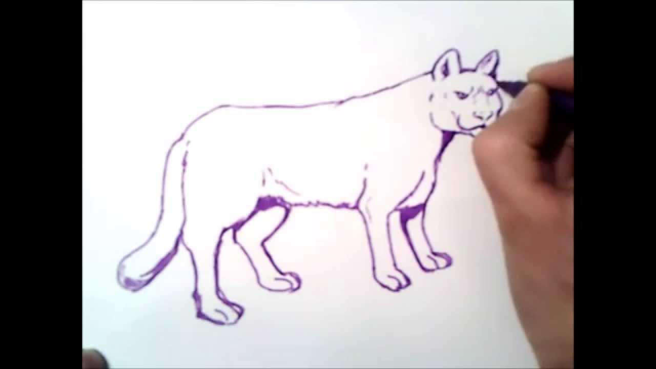 como dibujar un puma paso a paso  como dibujar un puma