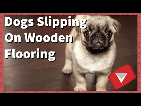 Dogs Slipping On Wooden Floors [Funny] (TOP 10 VIDEOS)