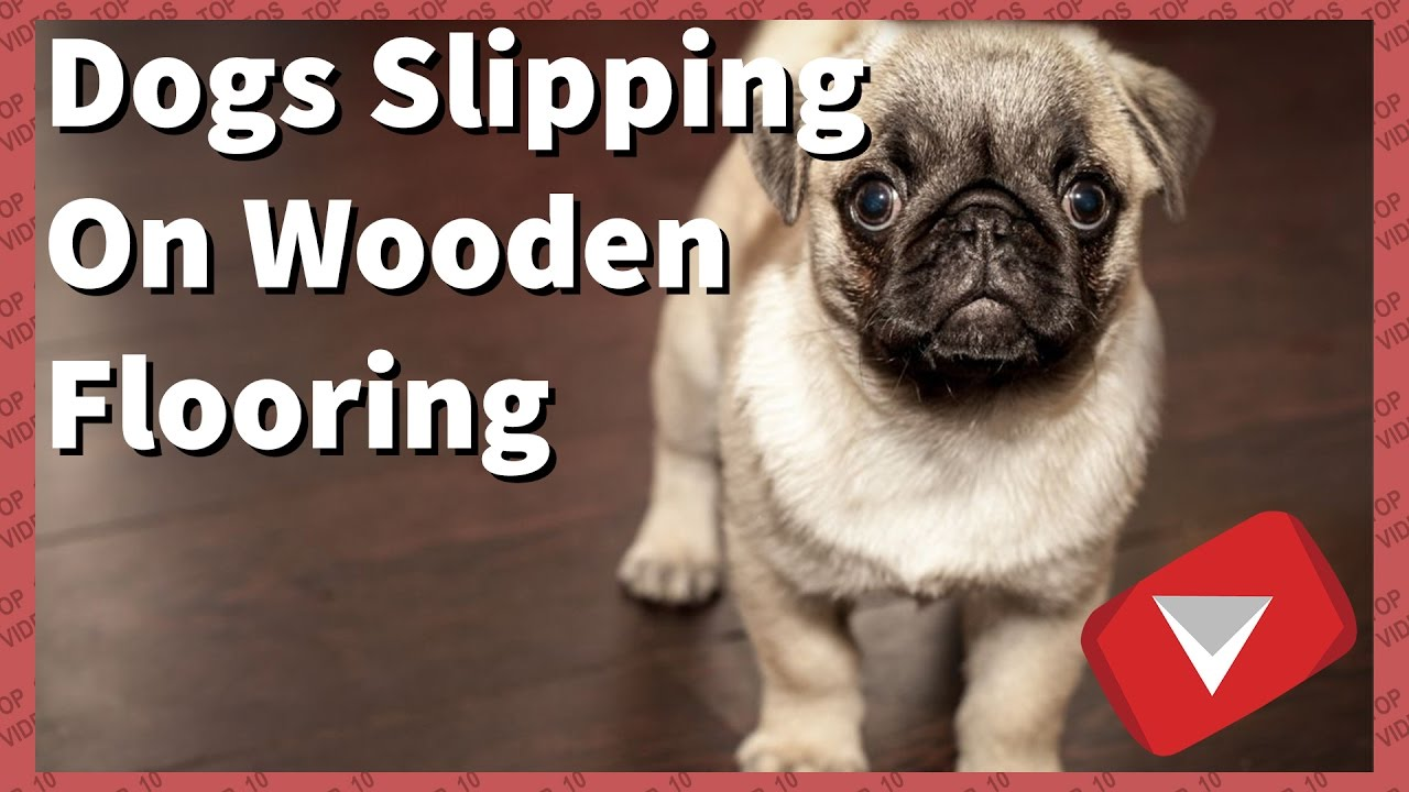 Dogs Slipping On Wooden Floors Funny Top 10 Videos