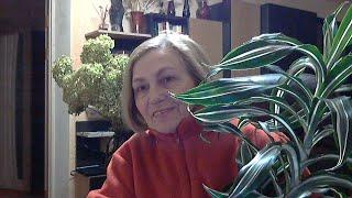 Комнатные растения в марте Отвечаю на ваши вопросы