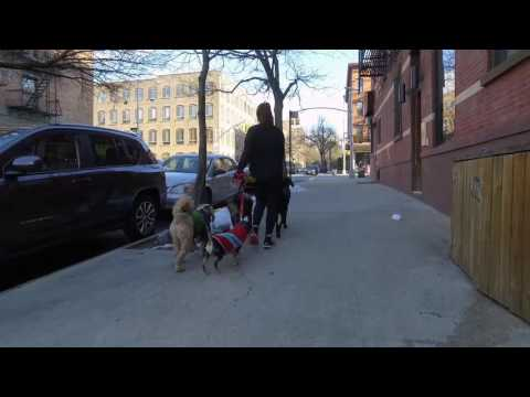Dogger's Video Ad