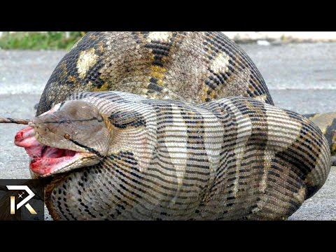 10 Most Dangerous Animals In Australia