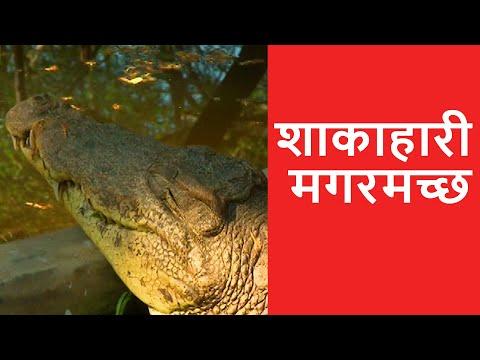 Vegetarian Crocodile - OMG! Yeh Mera India