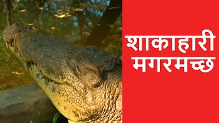 Vegetarian Crocodile - OMG! Yeh Mera India
