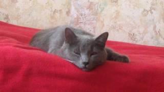 Кот который не давал спать будет наказан!