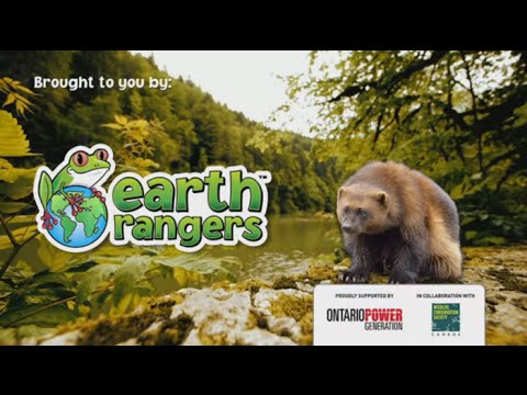 Help Protect Wolverines