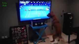 Смешные Собаки Смотря телевизор 2014