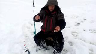 Как сделать поставушки для ловли судака!
