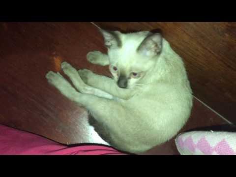 Tommy busy cat | funny cat | cute cat | cat | lovely cat