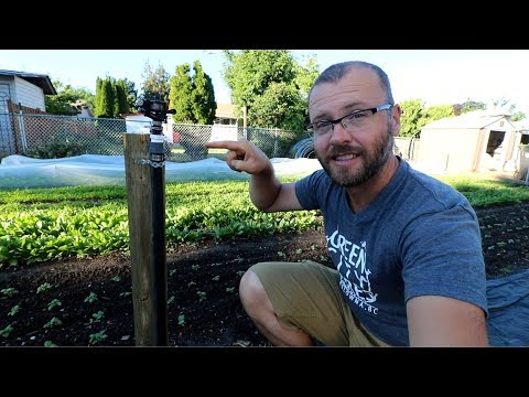 I'VE HAD ENOUGH WITH DRIP IRRIGATION! - How to install an overhead sprinkler system