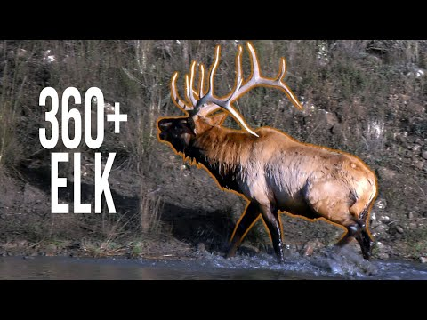 360+ Inch Bull! Hunting Colorado Elk (Elk Hunting)