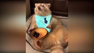 Видео про кошек до слёз 22 смешные видео с животными приколы с котами 2019 видео про котов 2019