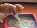 ??Tip para ELIMINAR el mal olor al arenero de tu gato!!! ??