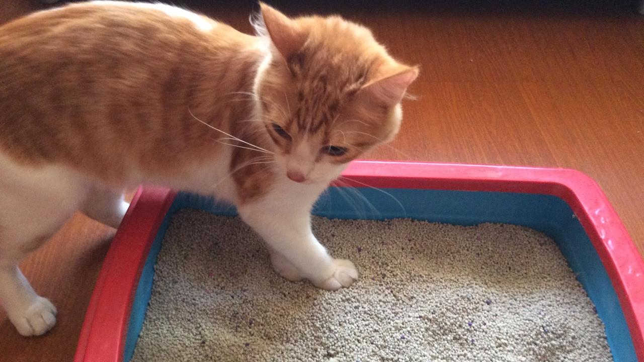 quitar heces de gato