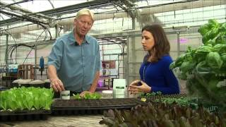 The Big Idea: Hydroponic and Vertical Farming