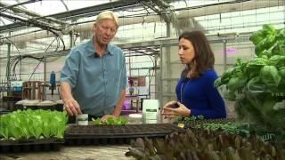 The Big Idea: Hydroponic and Vertical Farming
