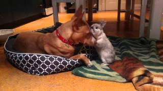 Bunny loves Dog (Basil loves Bibbo)