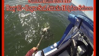 Salmon Bum - Columbia River Seal Attacks Helpless Salmon 2014 HD