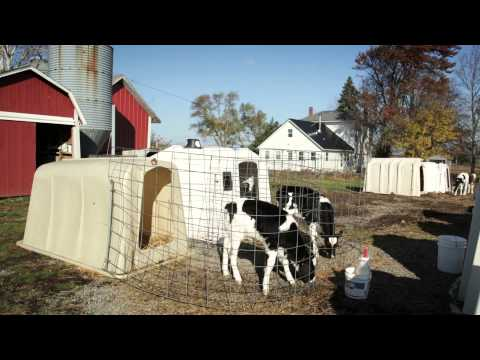 Sieg Dairy