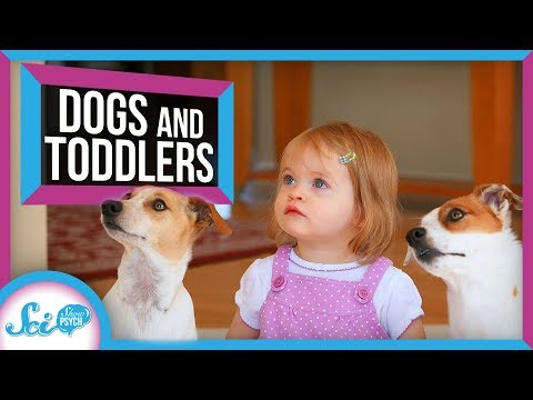 Is Your Dog As Smart As A Two Year Old?
