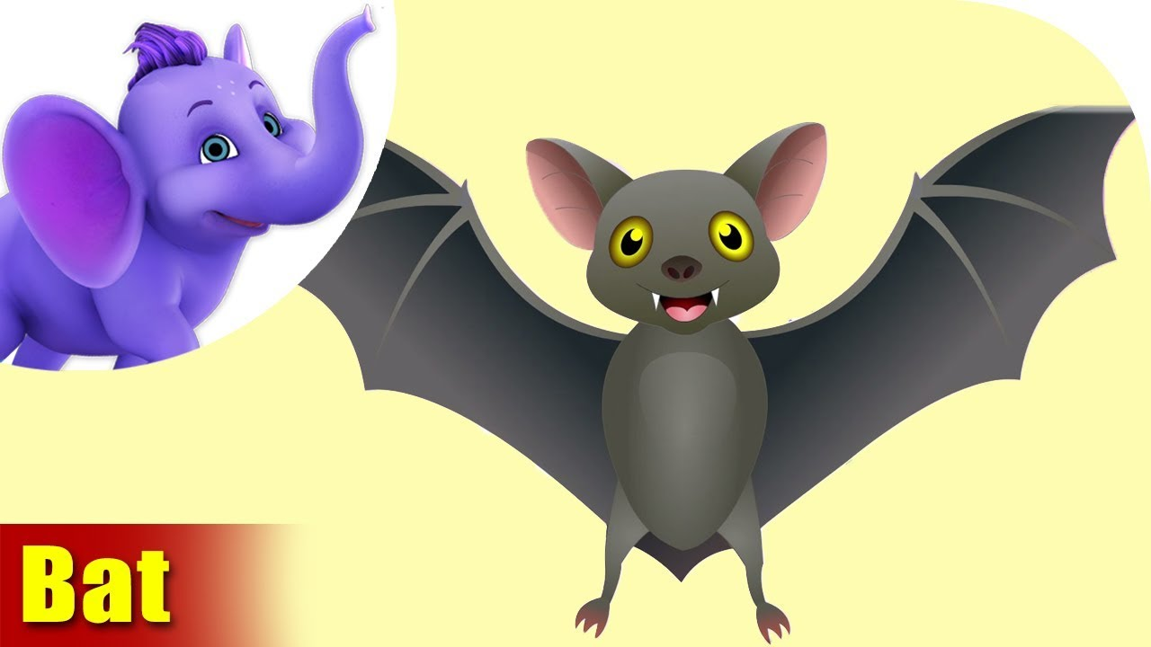 Bats Educational Videos | WatchKnowLearn