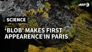 'Blob' makes first appearance at Paris zoo   AFP