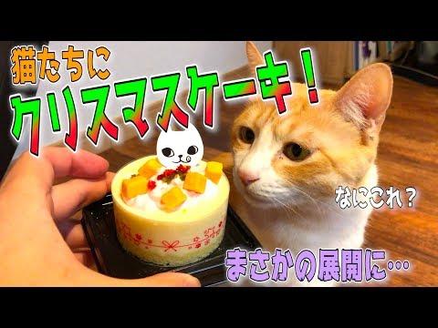 猫用のクリスマスケーキを猫たちにあげてみたら衝撃の結果にwww