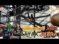 Aksi Murai Batu Jibril Full Roll Tembak Jadi Lawan Lawan Nya Down  Mp3 - Mp4 Download