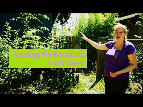 Farming My Backyard - Fruit Trees - Mobile Minute