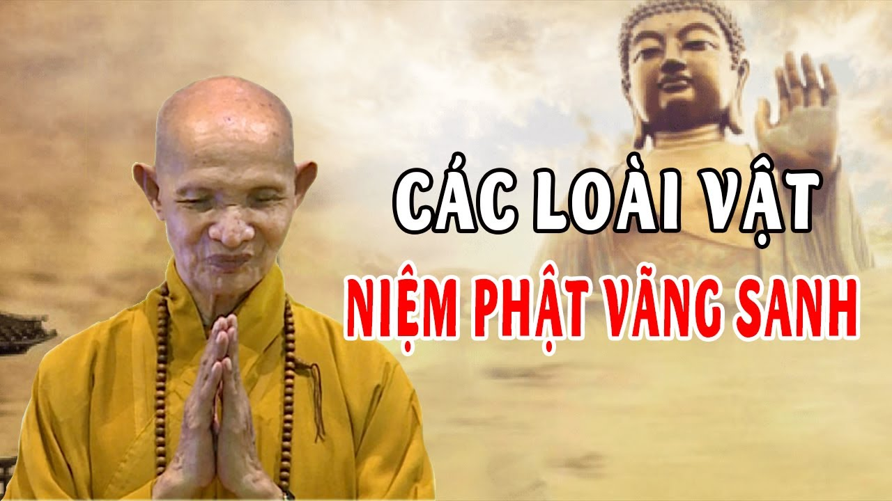 Truyện Tâm Linh Thích Giác Hạnh Có Thật... Các Loài Vật Niệm Phật Vãng Sanh