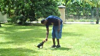Dog Training In Miami & Orlando K9 Enforcement Training Beagle